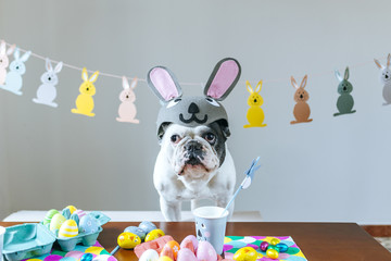 Dog with rabbit hat on table full of Easter eggs