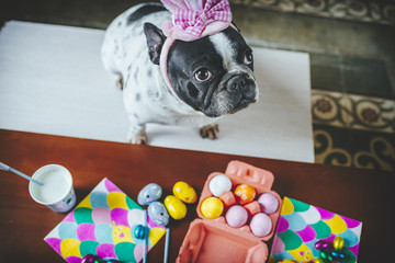 Dog with hat on table full of Easter eggs