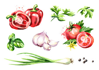 Fresh vegetables and herbs set. Watercolor hand drawn illustration, isolated on white background