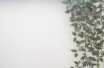 Green leafs on white wall, hanging plants