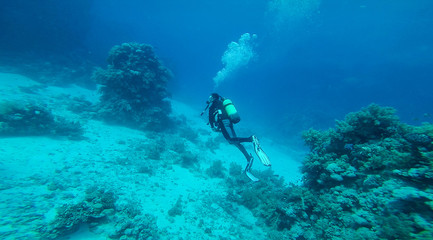 Diver at the red Sea between the corals