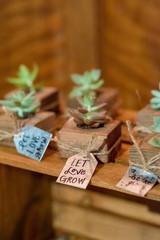 Succulents at Wedding Reception