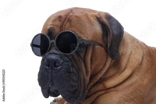 Beautiful Dog Stock Photo And Royalty Free Images On Fotolia Com