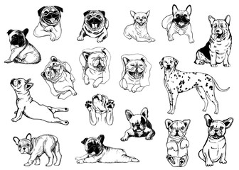 Set of hand drawn sketch style dogs isolated on white background. Vector illustration.