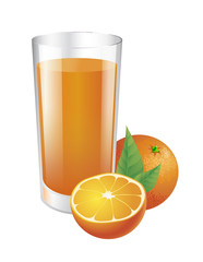 Glass of orange juice and oranges. Vector isolated illustration.