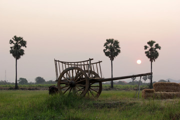 bullock cart in field
