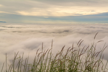 sea of mist  and grass flower at sunrise background