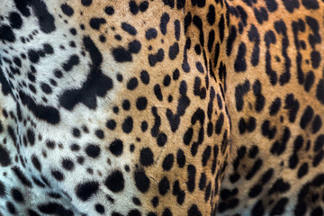 Skin and Leopard pattern.
