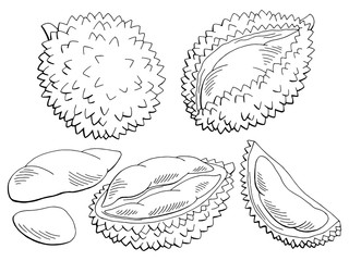Durian fruit graphic black white isolated sketch illustration vector