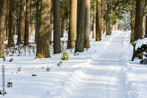 Forest cemetery with lanterns by the graves in winter  Newly