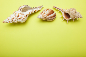 Blank paper card and seashells on yellow background. Copy space.