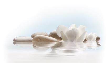 spa relax con flores y piedras en agua