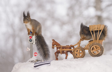 red squirrels with a traffic light with a wagon and horse