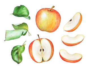 Hand drawn watercolor apples with green leaf isolated on white background.