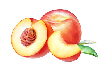 Watercolor realistic botanical illustration of the peach fruits isolated on white background.