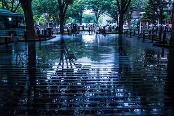 雨の定禅寺通り(仙台)