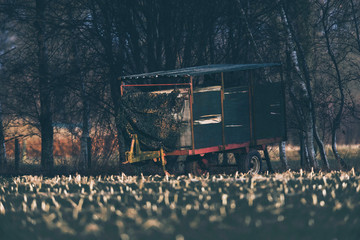 Vintage cattle truck parked at edge of field used as deer watching post. Lit by low winter sunlight.
