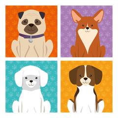 cute dogs mascots icon