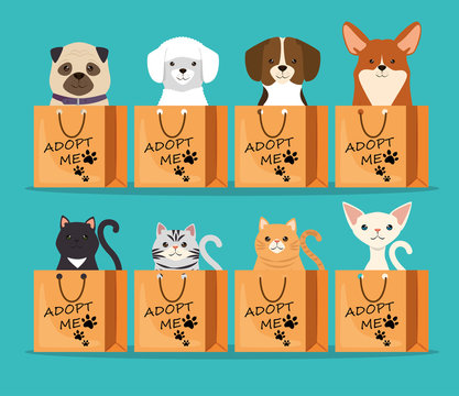 dogs and cats pets in adoption bags characters