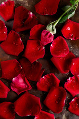 Top view flat lay red rose petals on dark background. Romance, passion concept. Valentines day. Text space