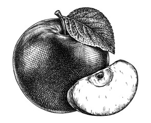 Engrave isolated apple hand drawn graphic illustration