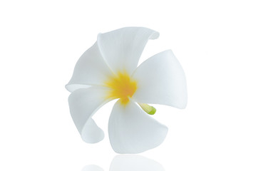 Plumeria isolated on white background