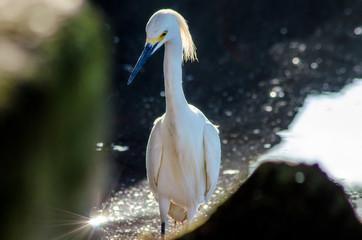 belos pássaros do meu país
