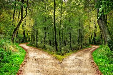 Wald mit Wegen in zwei Richtungen