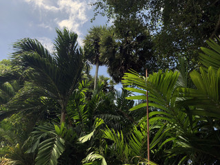 tropical forest with palm trees and blue sky