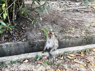 monkey sitting on a concrete ditch next to a tree