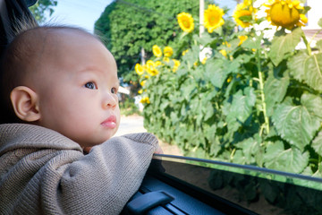 Cute asian little toddler baby boy in the car and observing flower from open window,.little kid is looking at roadside sunflowers, curiosity concept