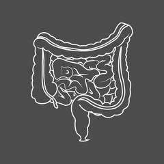 Human digestive system intestines gut anatomy gastrointestinal tract diagram. Monochrome contour of the intestine