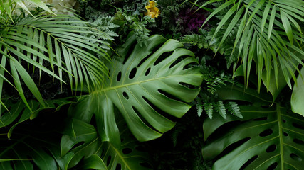 Green tropical leaves Monstera, palm, fern and ornamental plants backdrop background Fototapete