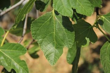 Single fresh leaf