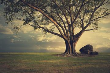Big Horrible tree (Bonhi) on the ground. Nature background.