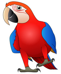 Cute macaw bird cartoon. Vector illustration