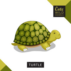 A cute turtle. Vector illustration from wild animals series. A picture for children's educational books, for a print on a T-shirt or your design.