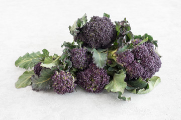 Closeup of Purple Sprouting Broccoli