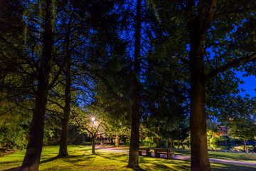 quiet night in an empty park with tall trees, benches, street lights