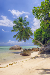 Rocks and Palm Trees at Beach, Anse a la Mouche, Mahe, Seychelles