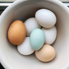 Blue, brown, and white farm fresh chicken eggs in a bowl.