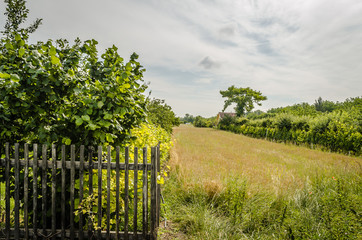 Arable land in the summer