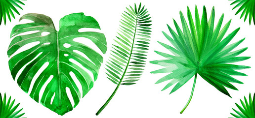 Tropical green palm leaf set watercolor illustrated