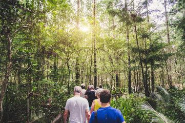 Group of people walking in a forest from back. Adventure, travel, tourism, hike and people friendship concept. Sports activity