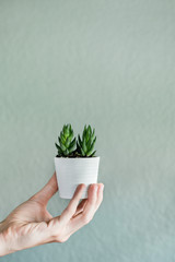 Small Succulent Being Held In White Pot.