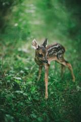 baby deer standing in the meadow alone