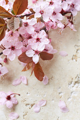 Wall Mural - Spring Blossoms on a Stone Background