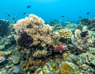 Coral reef off coast of Bali