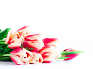 Close up of red tulips on white background.