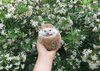 Hand holding hedgehog in front of flowers